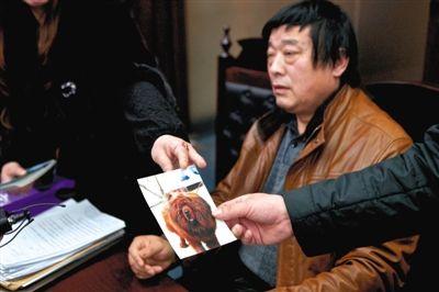 狗主人出示藏獒照片。昨日,藏獒美容致死索赔案二审开庭。新京报记者 周岗峰 摄